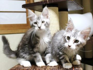 Clair_kittens_18062105