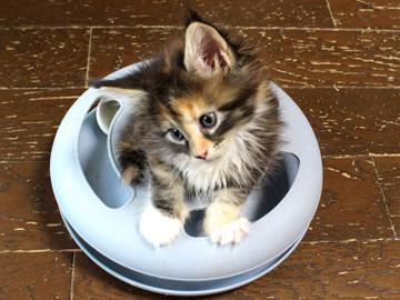Kitten_18062402