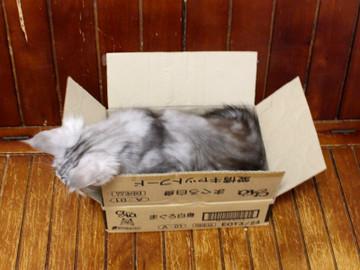 Kitten_18062403
