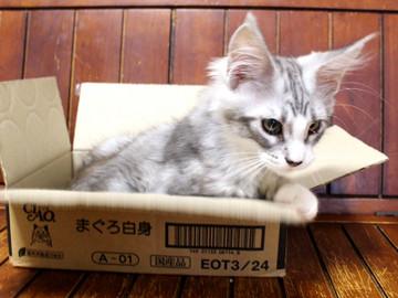 Kitten_18062404