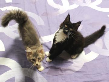 Kittens_18062801