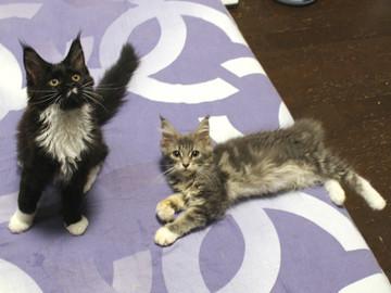 Kittens_18062802