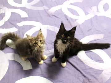 Kittens_18062803
