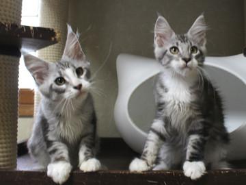 Clair_kittens_18062901
