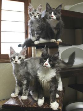 Kittens_18062901