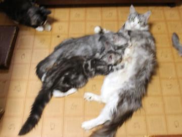 Kittens_18070101