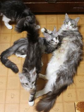 Kittens_18070102
