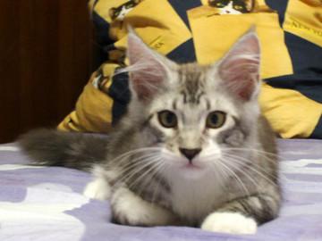 Clair_kitten2_18070803