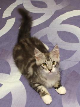 Clair_kitten2_18070804