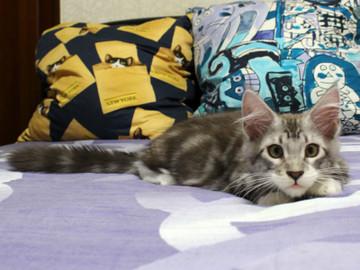 Clair_kitten2_18070805