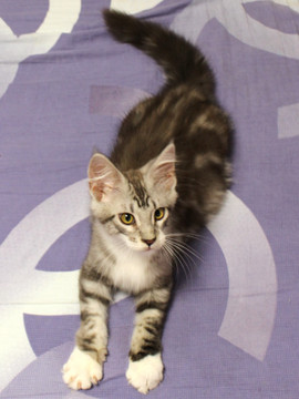 Clair_kitten2_18070806