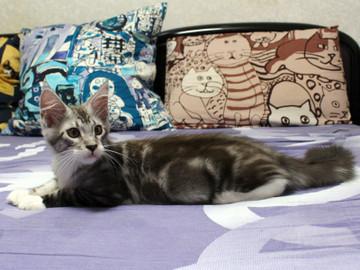 Clair_kitten2_18070807