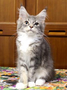 Bouquet_kitten3_18070904