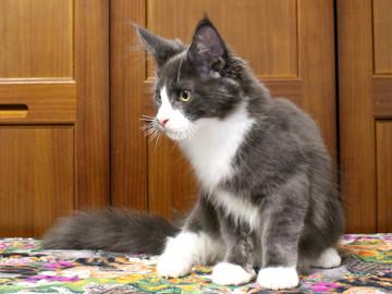 Runrun_kitten1_18070902