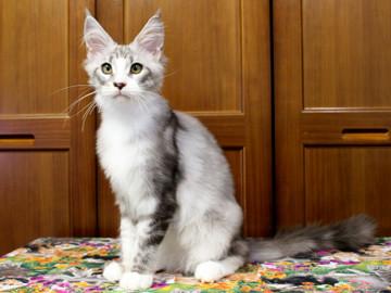 Clair_kitten1_18071601