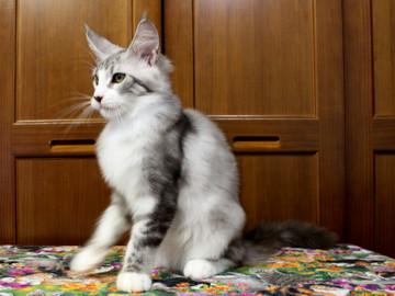Clair_kitten1_18071602