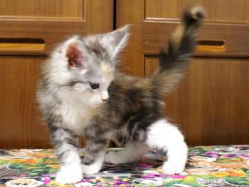 Waco_kitten1_18071602