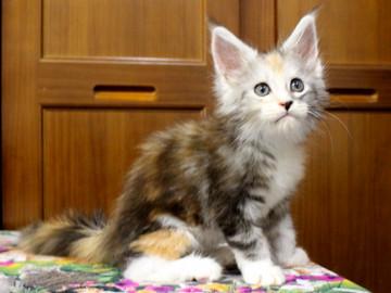 Waco_kitten1_18071603