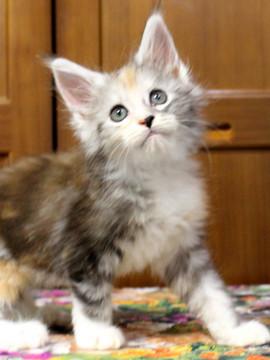 Waco_kitten1_18071606