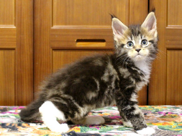 Waco_kitten2_18070901
