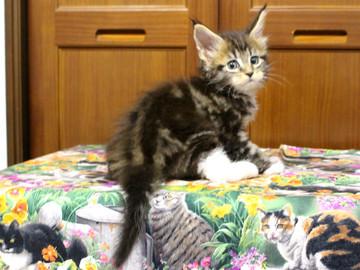 Waco_kitten2_18070902