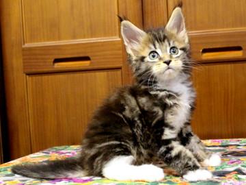 Waco_kitten2_18070903
