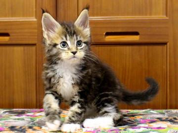 Waco_kitten2_18070904