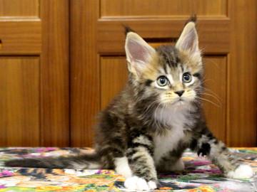 Waco_kitten2_18070905