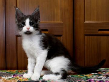 Waco_kitten3_18071601
