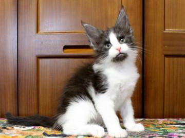 Waco_kitten3_18071602