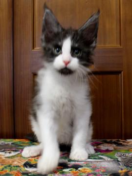 Waco_kitten3_18071605