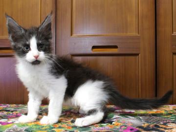 Waco_kitten3_18071606
