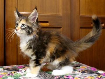 Waco_kitten4_18071602