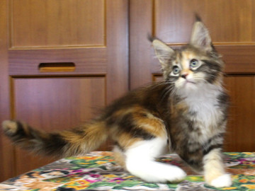 Waco_kitten4_18071603