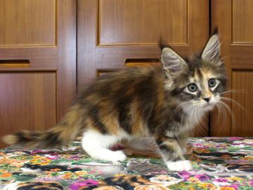 Waco_kitten4_18071605