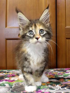 Waco_kitten4_18071606