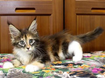Waco_kitten4_18071607