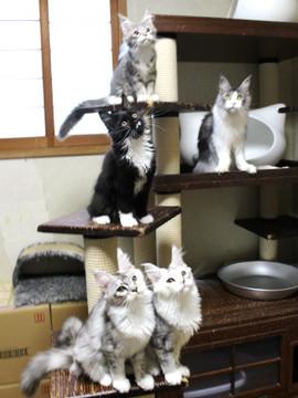 Kittens_18072401