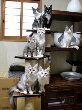 Kittens_18072403