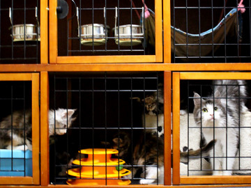 Waco_kittens_18072302