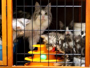 Waco_kittens_18072303