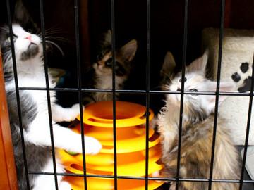 Waco_kittens_18072304