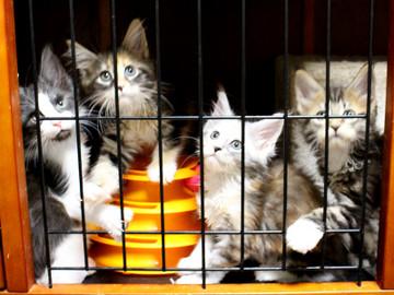 Waco_kittens_18072305