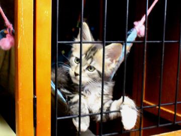 Waco_kittens_18072801