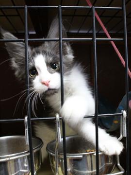 Waco_kittens_18072802