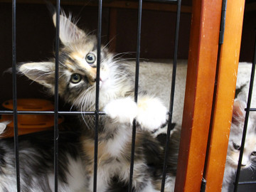 Waco_kittens_18072803