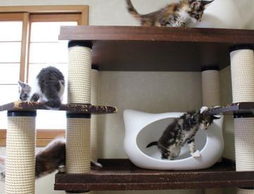 Waco_kittens_18072804