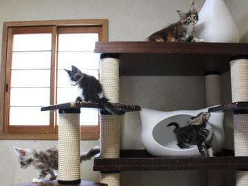 Waco_kittens_18072805