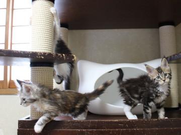 Waco_kittens_18072806