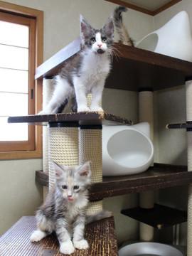Waco_kittens_18072807